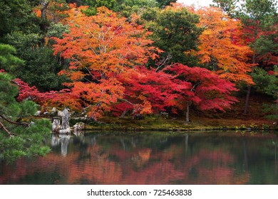 Beautiful autumn foliage / Japan