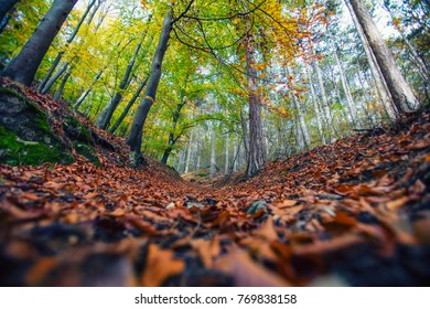 beautiful autumn forest background