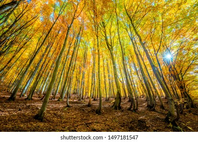 Beautiful Autumn forest background - autumnal landscape with bright yellow leaves and trees in wild forest