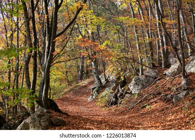 Beautiful autumn forest in the canyon of Crimea