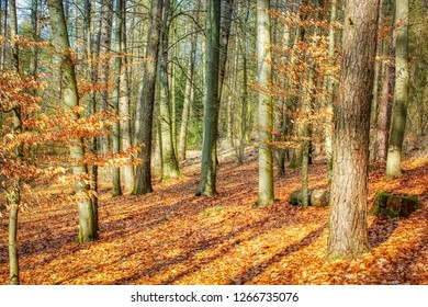 Beautiful autumn forest in the evening light colorful and romantic
