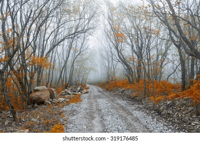 Beautiful autumn forest in fog
