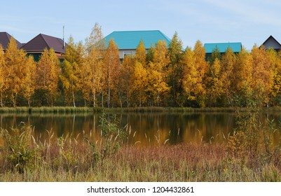 Beautiful autumn forest near rural houses