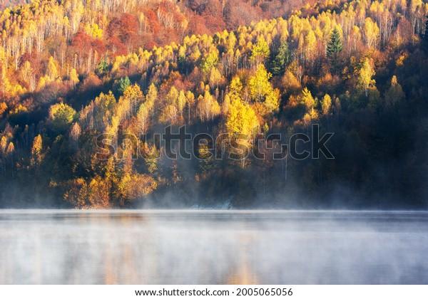 beautiful-autumn-forest-reflecting-foggy