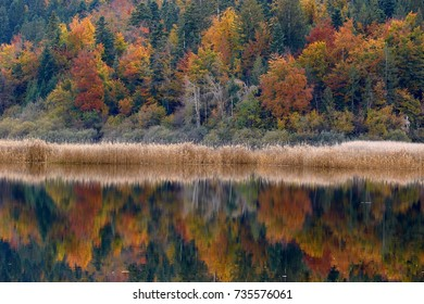 Beautiful autumn forest reflecting in the lake