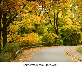Beautiful autumn forest with walkiing path