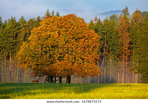 Beautiful autumn landscape with a big tree and wild red deer.