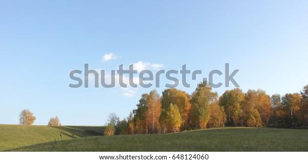 beautiful-autumn-landscape-birches-on-60
