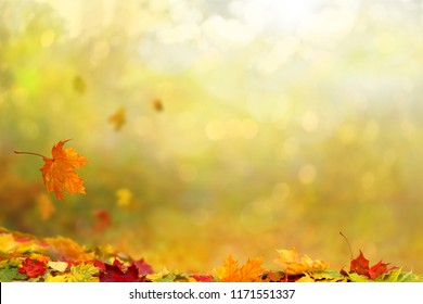 Beautiful autumn landscape  Colorful foliage in the park. Falling  leaves natural background .
