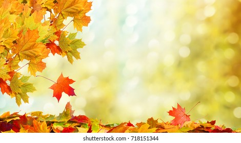Beautiful autumn landscape. Colorful foliage in the park. Falling leaves natural background