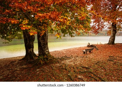 Beautiful autumn landscape with colorful leafs and river