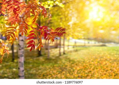 Beautiful autumn landscape. Colorful natural background. Red and yellow leaves of trees in the park.