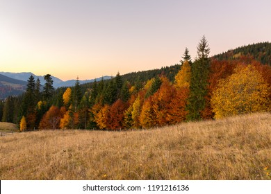 Beautiful autumn landscape with colorful trees at sunset in Carpathian mountains, Ukraine. Red, yellow and green fall leaves