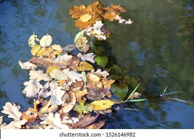 Imágenes Fotos De Stock Y Vectores Sobre Leaf Wallpaper Hd