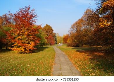 Beautiful autumn landscape  -  golden autumn - autumn alley