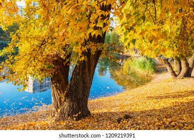 Beautiful autumn landscape. Golden colores of Indian Summer. Warm and sunny October day near the pond,