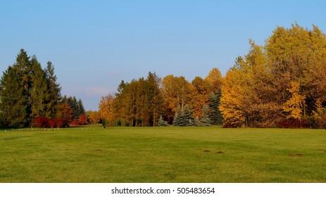 Beautiful autumn landscape - great autumn trees