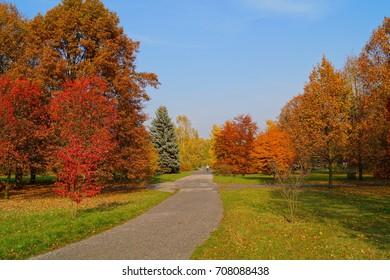 Beautiful autumn landscape - great autumn trees - autumn alley