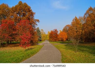 Beautiful autumn landscape great autumn trees golden  autumn