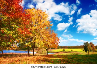 Beautiful autumn landscape at the morning park
