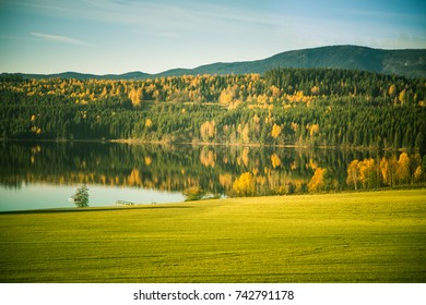 Beautiful autumn landscape in Norway with yellow leaves. Colorful nordic scenery.