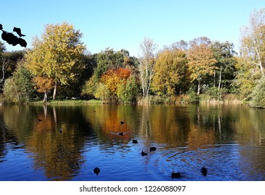 Beautiful Autumn landscape with pond, birds and colorful trees, reflecting in the water.
