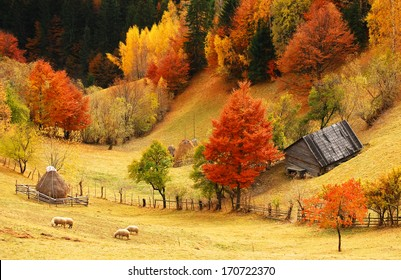beautiful autumn landscape, sheeps