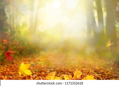 Beautiful autumn landscape with  trees and sun. Colorful foliage in the park. Falling leaves natural background
