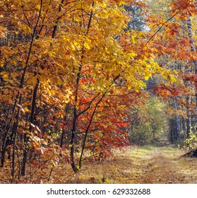 Beautiful autumn landscape with yellow and red leaves on the trees