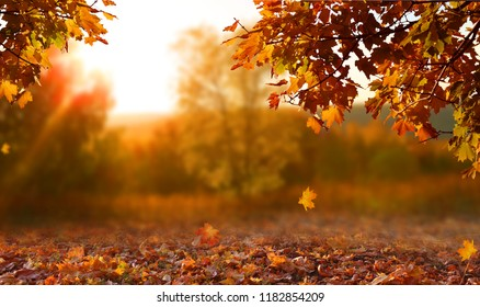 Beautiful autumn landscape with yellow trees and sun. Colorful foliage in the park. Falling leaves natural background - Shutterstock ID 1182854209