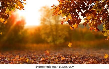 美麗的秋天景觀與黃色的樹木和陽光。 園內有色彩繽紛的樹葉。 落葉自然背景