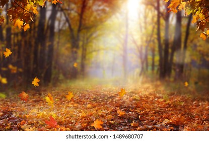 Beautiful autumn landscape with yellow trees and sun. Colorful foliage in the park. Falling  leaves natural background .Autumn season concept