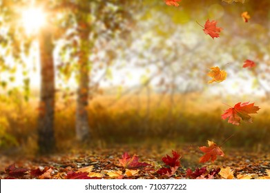 Beautiful autumn landscape with yellow trees and sun. Colorful foliage in the park. Falling leaves natural background
