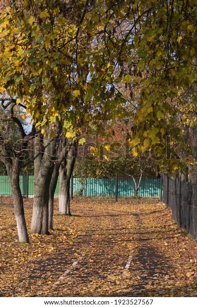 beautiful-autumn-landscape-yellow-trees-
