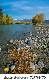 Beautiful autumn landscape.Golden autumn. mountain river, stones, shore, yellow leaves