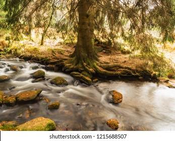 Beautiful autumn lane in the forest, A golden brook in the Sumava Forest. Colorful autumn on Sumava. Bavarian Forest. Czech Republic