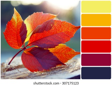 Beautiful autumn leaf on stump and palette of colors