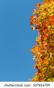 Beautiful autumn leaves against the blue sky, background.