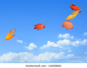 Beautiful autumn leaves carried on a breeze