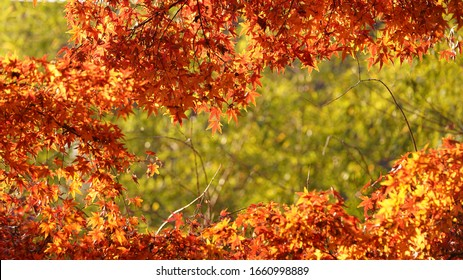 The beautiful autumn leaves with the colorful autumn leaves in the park