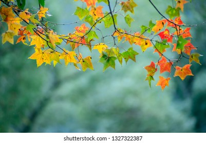 The beautiful autumn leaves in the fall