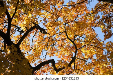 Beautiful autumn leaves at forest
