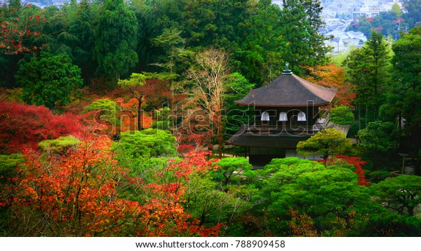 Beautiful autumn leaves at Ginkakuji Temple, Kyoto Japan