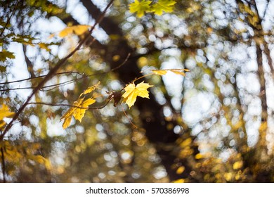 Beautiful autumn leaves in the park