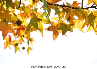 Beautiful autumn leaves in white background
