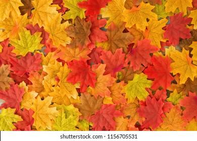 Beautiful autumn maple leaves background. nature fall season