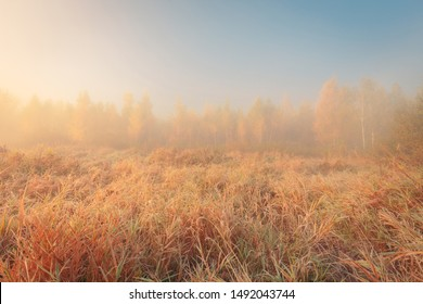 Beautiful autumn misty sunrise landscape. Foggy morning at scenic  meadow.