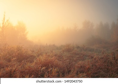 Beautiful autumn misty sunrise landscape. Foggy morning at scenic high grass meadow.