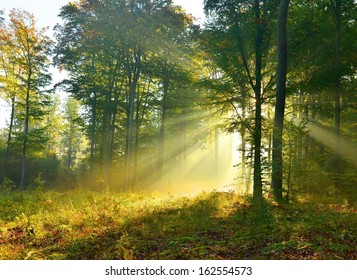 Beautiful autumn morning in the forest