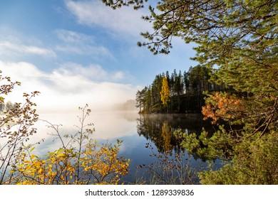 Beautiful autumn morning in nature